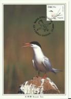 Carte Maximum - Oiseaux - Irlande - Eire - Roseate Tern - Sterne De Dougall - Sterna Dougallii - Cartoline Maximum