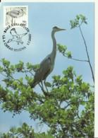 Carte Maximum - Oiseaux - Irlande - Eire - Grey Heron - Héron Cendré - Ardea Cinerea - Cartoline Maximum