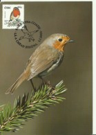 Carte Maximum - Oiseaux - Irlande - Eire - Robin - Rouge-gorge Familier - Erithacus Rubecula - Cartoline Maximum