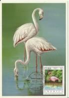 Carte Maximum - Oiseaux - Cuba - Greater Flamingo - Flamant Rose - Phoenicopterus Ruber - Maximumkarten