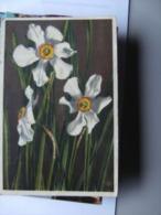 Zwitserland Schweiz Suisse Narcissus Poeticus Sternblume - Andere
