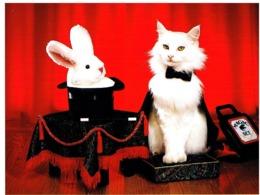 Chat Blanc Habillés  -white Cat -menschliche Katze-witte  Poes Met Toverhoed - Gatos