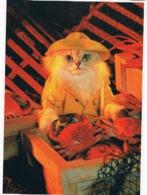 Chat Habillés  - Dressed Cat -katze -  Poes Visser Op Kreeften - Gatos