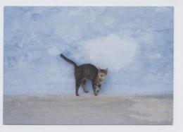 CHAT  -RECTO/VERSO - B72 - Katten