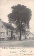 Maison Communale Et L'Arbre Séculaire - Sint-Gilles-Waas - Sint-Gillis-Waas