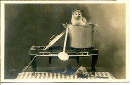 CHATS - Un Classique : Le Chat Dans Un Faitout - Jolie Photo éditeur EL Libellule - Cats