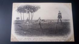 Arcachon - Echassiers Landais / Carte Précurseur Voyagée En 1903 / Edition ND Phot N°28 - Arcachon