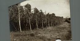 KENT KENTISH HOP  GARDEN Hopfenanbaugebietes HOP PICKING  15*12CM Fonds Victor FORBIN 1864-1947 - Profesiones