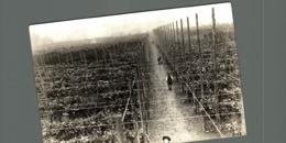 Hopfenanbaugebietes HOP PICKING  15*12CM Fonds Victor FORBIN 1864-1947 - Profesiones