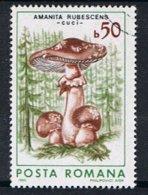 Roemenie Y/T 3696 (0) - Usado