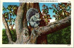New York Long Island I'm Nuts About Westhampton Beach - Long Island
