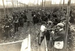 HOP PICKING Hopfenanbaugebietes    15*12CM Fonds Victor FORBIN 1864-1947 - Fotos