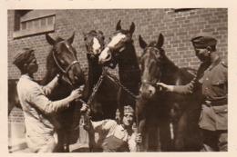 Foto Deutsche Soldaten Mit Pferden - 2. WK - 8,5*5,5cm (44045) - Krieg, Militär