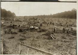 HOP PICKING  Hopfenanbaugebietes    15*12CM Fonds Victor FORBIN 1864-1947 - Profesiones
