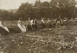 PADDOCK WOOD HOP PICKING  Hopfenanbaugebietes    16*12CM Fonds Victor FORBIN 1864-1947 - Profesiones