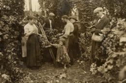 KENT ENGLAND  HOP PICKING  Hopfenanbaugebietes    15*11CM Fonds Victor FORBIN 1864-1947 - Fotos