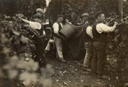 HOP PICKING  Hopfenanbaugebietes    15*11CM Fonds Victor FORBIN 1864-1947 - Fotos