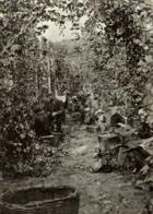 HOP PICKING KENT  Hopfenanbaugebietes    15*11CM Fonds Victor FORBIN 1864-1947 - Fotos