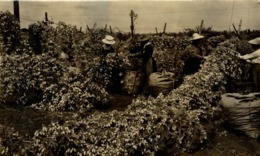 HOP PICKING KENT  Hopfenanbaugebietes    20*12CM Fonds Victor FORBIN 1864-1947 - Profesiones