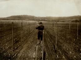 HOP PICKING KENT  KENTISH HOPFIELD  Hopfenanbaugebietes    21*16CM Fonds Victor FORBIN 1864-1947 - Profesiones