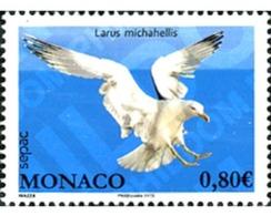 Ref. 306213 * MNH * - MONACO. 2013. MARINE BIRDS . AVES MARINAS - Non Classificati