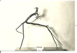 52 - PREZ SOUS LAFAUCHE / LE ZOO DE BOIS - LES BRANCHES ARTISTIQUES DE E. CHAUDRON - Autres Communes