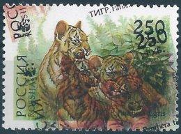 B6036 Russia Rossija Fauna Animal Tiger (250 Rubel) Organization WWF ERROR - Big Cats (cats Of Prey)