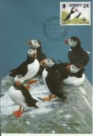 Carte Maximum - Oiseaux - Jersey - Macareux Moine - Fratercula Arctica - Jersey