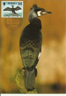 Carte Maximum - Oiseaux - Jersey - Cormoran - Phalacrocorax Carbo - Jersey