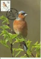 Carte Maximum - Oiseaux - Eire - Irlande - Pinson Des Arbres - Fringilla Coelebs - Cartoline Maximum