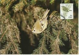 Carte Maximum - Oiseaux - Eire - Irlande - Roitelet Huppé - Regulus Regulus - Goldcrest - Cartoline Maximum