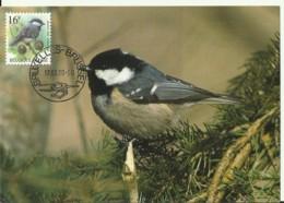 Carte Maximum - Oiseaux - Belgique - Mésange Noire - Cincia Mora - Maximumkarten (MC)
