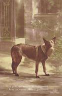 CHIEN -Il Porte Aux Blessés Du Soulagement.... - Guerra 1914-18