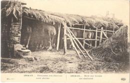 1914-15... Comment Nos Chevaux Sont Abrités - (ELD) - War 1914-18