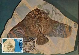 47888 Greece, Maximum 1982, Fossil Fish, Poisson Fossil,fossiler Fisch, Prehistory  Geology - Géologie