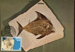 47889 Greece, Maximum 1982, Fossil Fish, Poisson Fossil,fossiler Fisch, Prehistory  Geology - Géologie