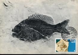 47890 Greece, Maximum 1982, Fossil Fish, Poisson Fossil,fossiler Fisch, Prehistory  Geology - Géologie