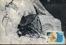 47891 Greece, Maximum 1982, Fossil Fish, Poisson Fossil,fossiler Fisch, Prehistory  Geology - Géologie