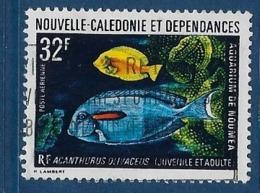 """Nle-Caledonie Aerien YT 145 (PA) """" Aquarium Nouméa """" 1973 Oblitéré - Luftpost"""