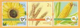 2019 Moldova Moldavie  Cereal Crops. Field Crops. Cereals. Sunflower. Corn. Series. Mint - Moldavie