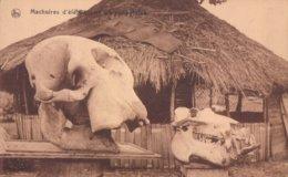Congo Belge Machoires D'élephant Et D'hippopotame ( Belgisch Kongo ) - Congo Belge - Autres