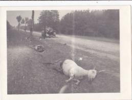 DEUTSCHLAND  --  ORIGINAL PHOTO  - FRANCE, ST. MALO   -  DESTROYED CAMION, DEATH HORSE, GOAT, CHEVRES  9 Cm X 6,6 Cm  - - 1939-45