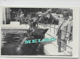 Portugal -Postal Foto - JARDIM ZOOLOGICO De LISBOA  - Guarda A Alimentar Hipopotamo. - Hippopotamuses