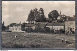 Carte Postale 59. Etroeungt  Vaches En Paturâge  Trés Beau Plan - France