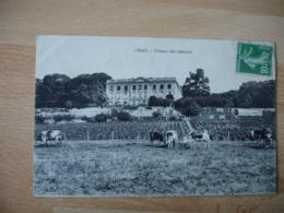 Limay Les Celestins Vigne - Limay