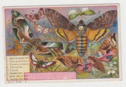 AB019 - CHROMO CHOCOLAT DEBAUVE & GALLAIS - Animaux - Les Papillons - Chocolat