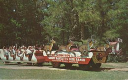 Silver Springs, Florida Free Sleigh Ride To And From Tommy Bartlett's Deer Ranch Home Of World Famous Glass Bottom Boats - Silver Springs
