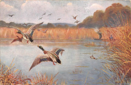 CHASSE - AUX CANARDS - Caza