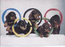 AK-div.31- 956    Hundeolympiade - Hunde