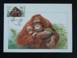 Carte Maximum Card Singe Monkey Orang Utan Tchéquie Ceska Czech Republic (ref 85767) - FDC